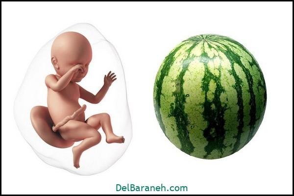 هفته سی و نهم بارداری (۱)