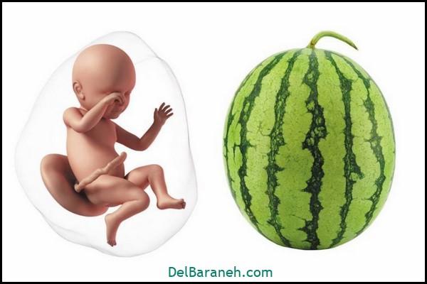 هفته چهلم بارداری (۱)