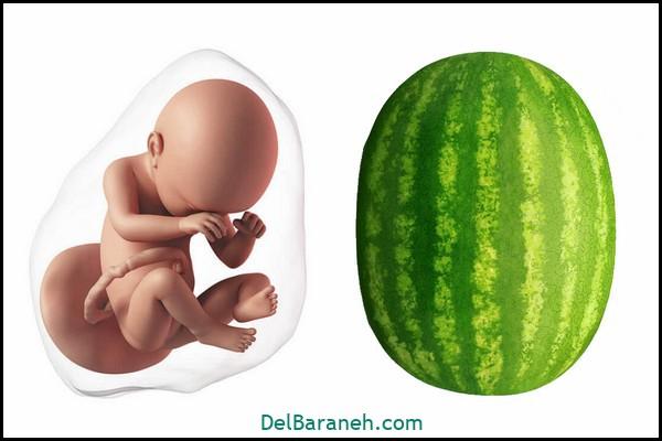 هفته چهل و دوم بارداری (۱)