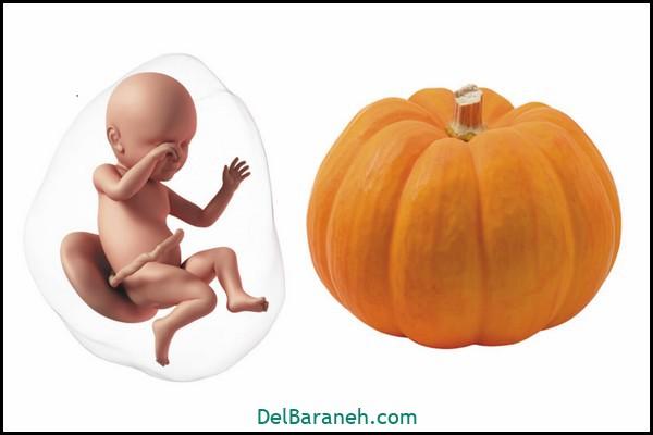 هفته چهل و یکم بارداری (۱)