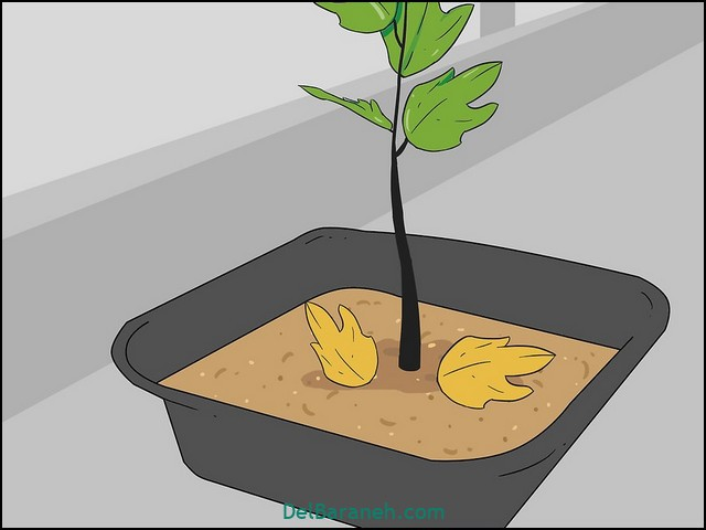 چقدر به گلدان آب بدهیم (۱۰)