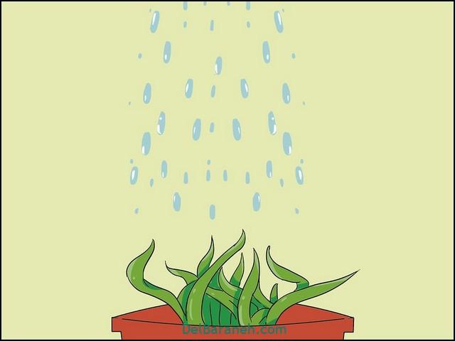 چقدر به گلدان آب بدهیم (۲)
