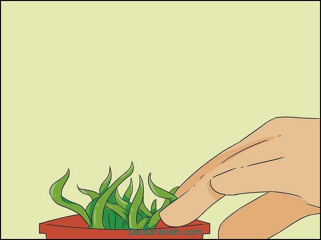 چقدر به گلدان آب بدهیم (۳)