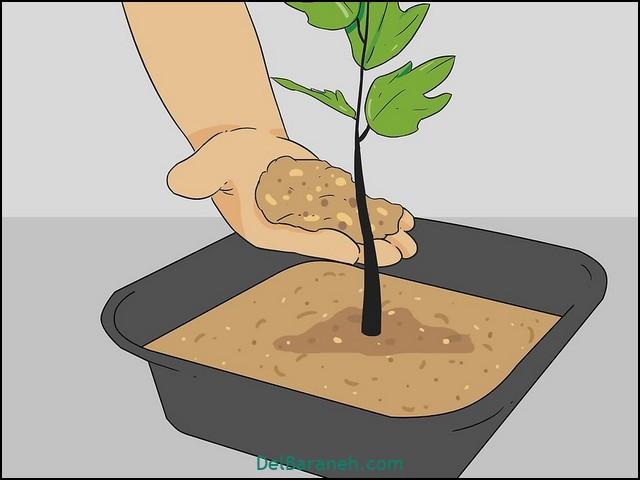چقدر به گلدان آب بدهیم (۸)