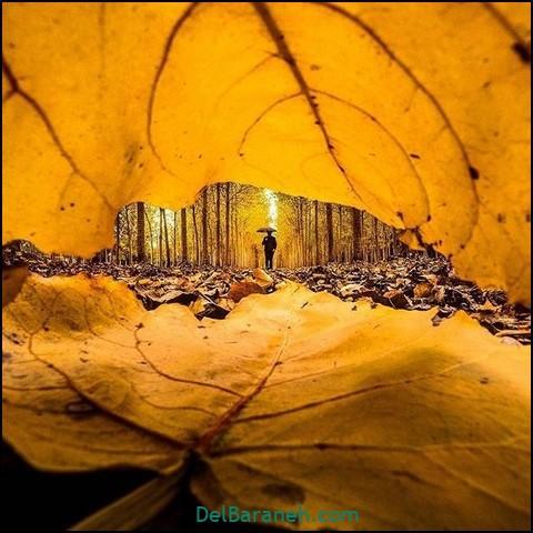تصاویر پاییز (۱۰)