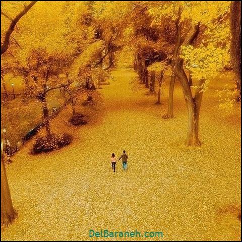 تصاویر پاییز (۴)