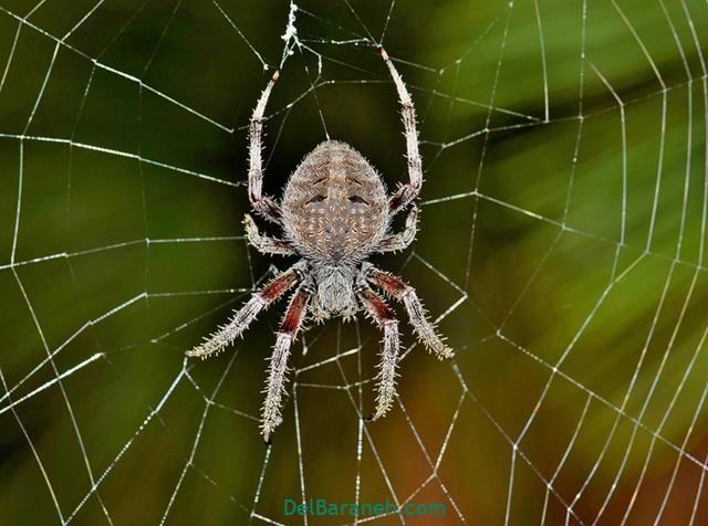 تعبیر خواب حمله کردن عنکبوت