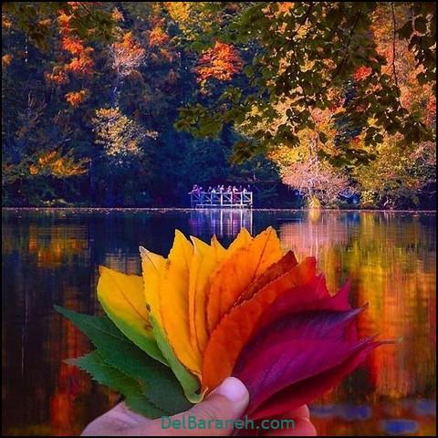 عکس طبیعت پاییز (۱۸)