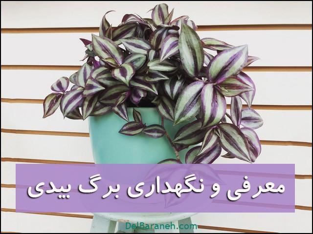 برگ بیدی (۱)