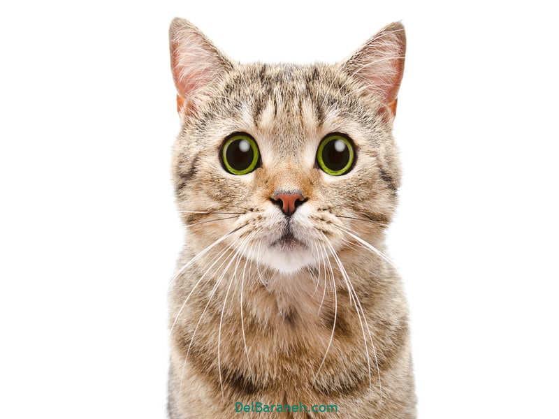 تعبیر خواب گربه از دیدگاه لوک اویتنهاو