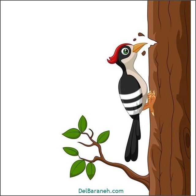 نقاشی حیوانات کودکانه (داروکوب-هدهد-شانه به سر)