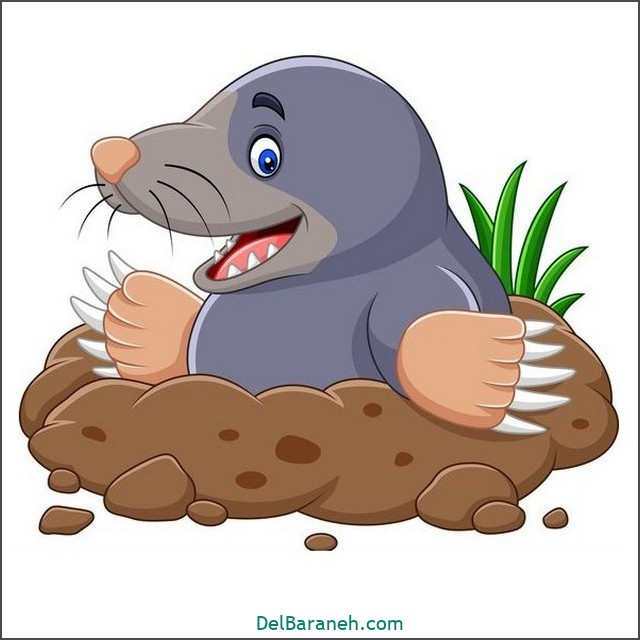 نقاشی حیوانات کودکانه (موش کور)