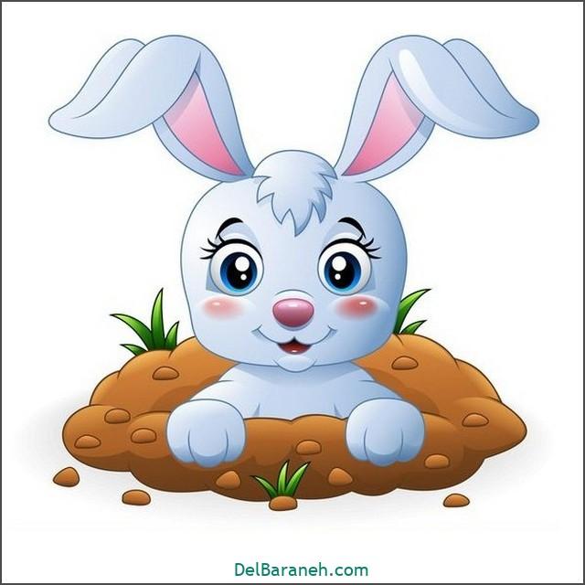 نقاشی خرگوش برای بچه ها (۱)
