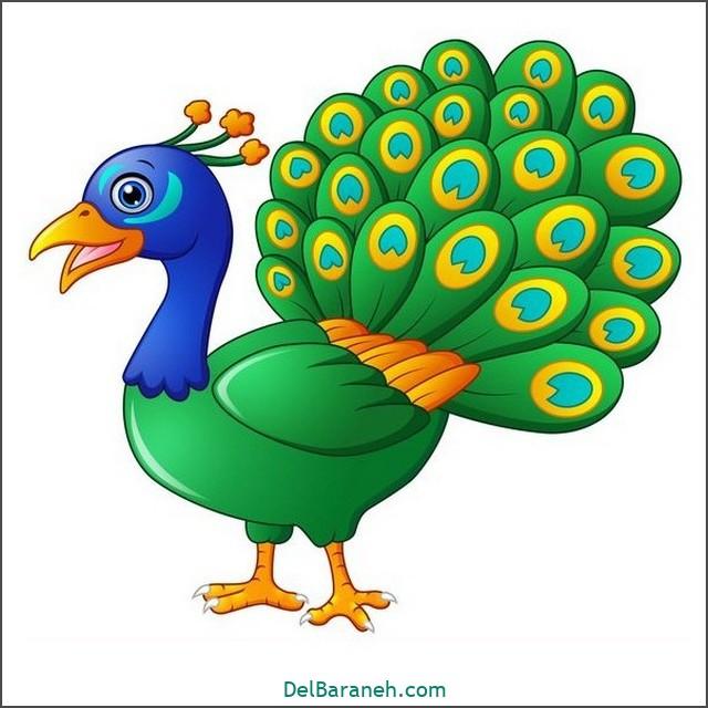 نقاشی طاووس برای بچه ها (۱)