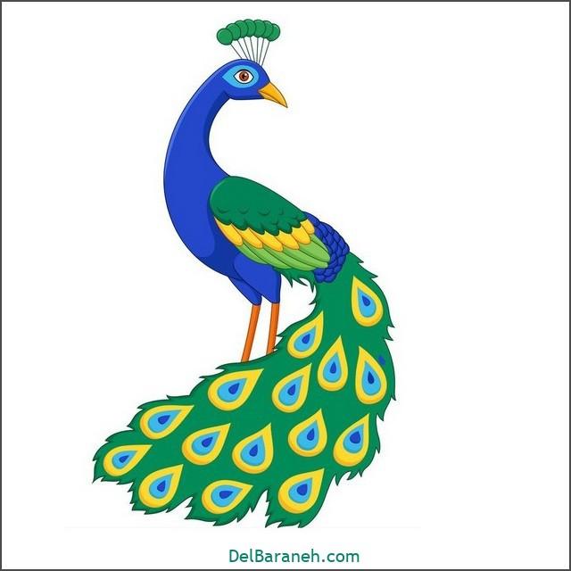 نقاشی طاووس برای بچه ها (۲)