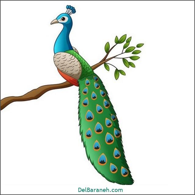 نقاشی طاووس برای بچه ها (۳)