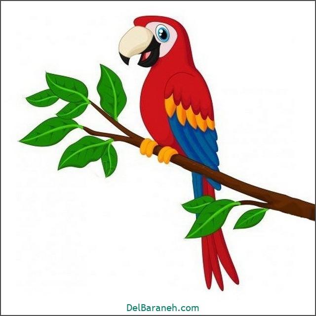 نقاشی طوطی برای بچه ها (۲)
