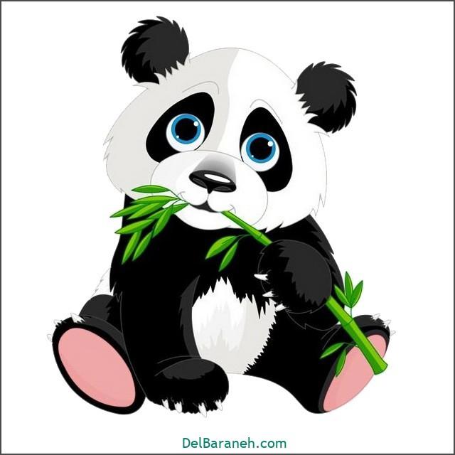 نقاشی پاندا برای بچه ها (۱)