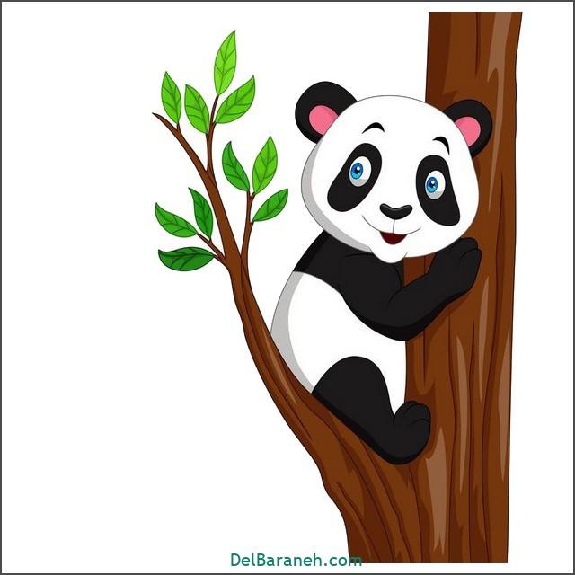 نقاشی پاندا برای بچه ها (۲)