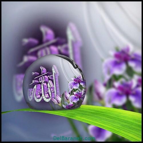 پروفایل الله (۸)