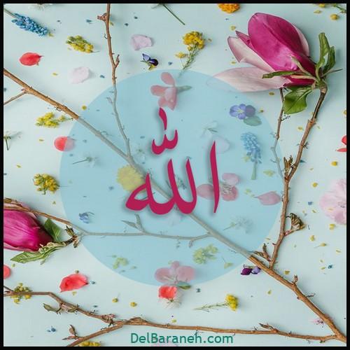 allah profile (10)