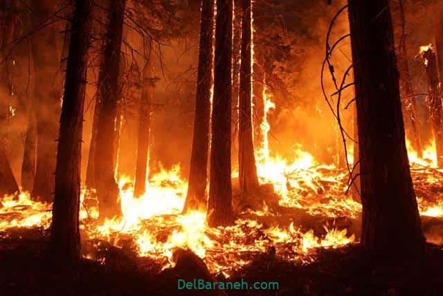 تعبیر خواب آتش گرفتن جنگل