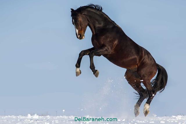تعبیر خواب اسب از دیدگاه لیلا برایت
