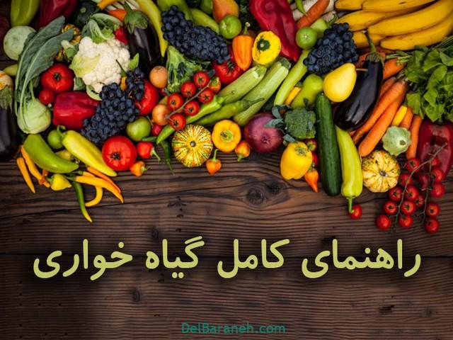 راهنمای کامل گیاه خواری