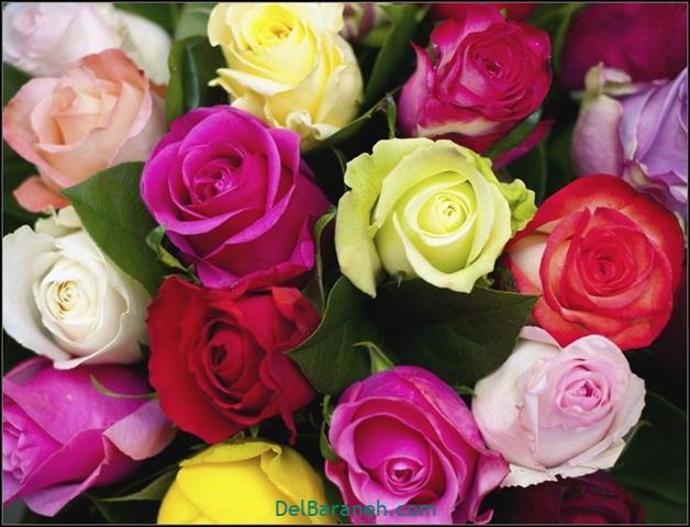 Flower profile photo (1)