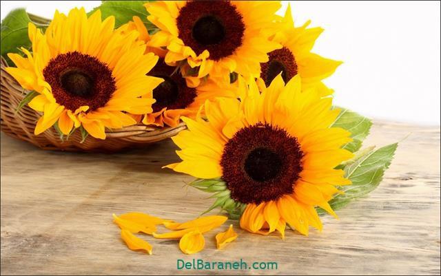 Flower profile photo (11)