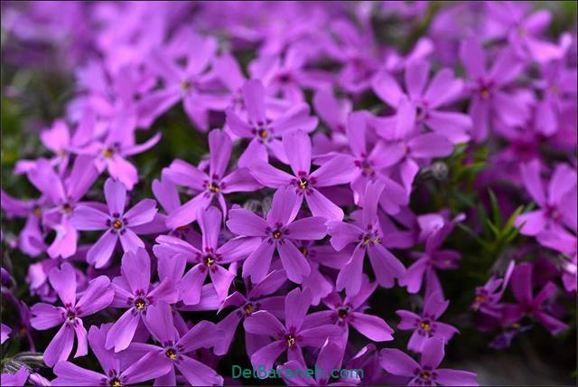 Flower profile photo (3)