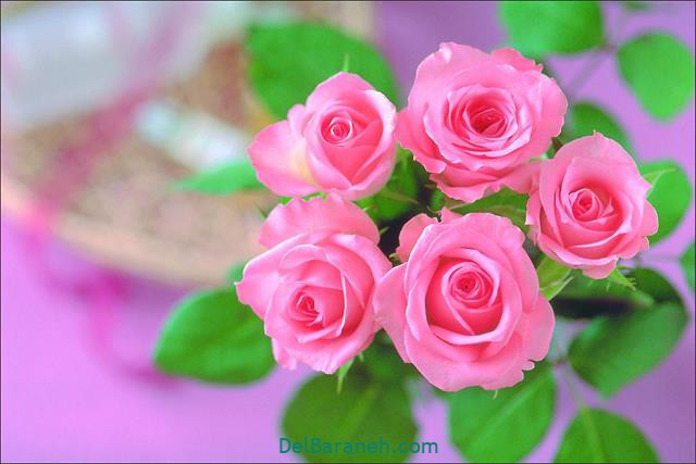 عکس گل برای پست اینستا