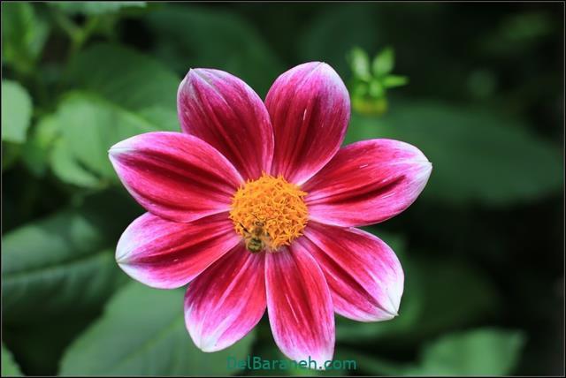 عکس پروفایل گل زیبا