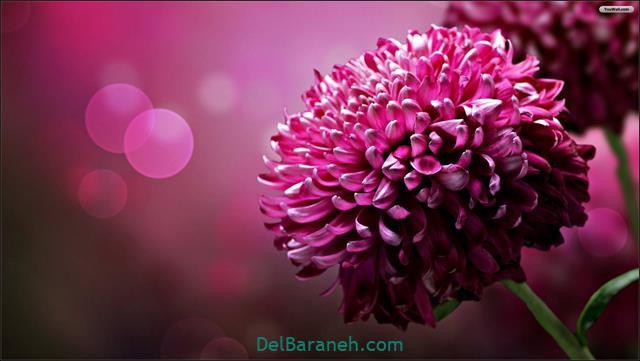 Flower profile photo (60)