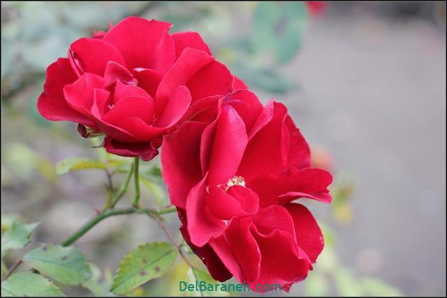 Flower profile photo (61)
