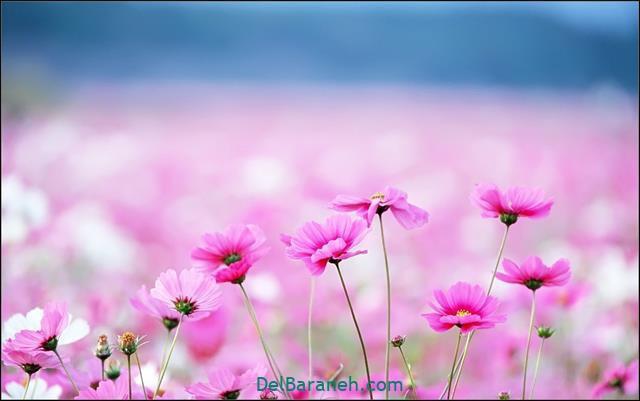 Flower profile photo (66)
