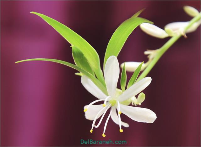 Flower profile photo (68)
