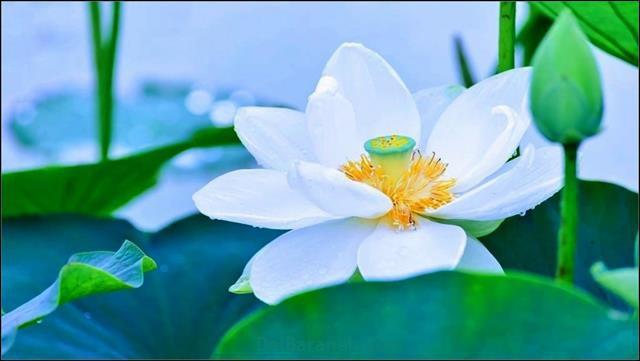 Flower profile photo (71)