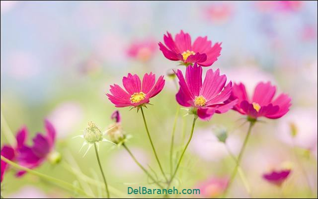 Flower profile photo (72)