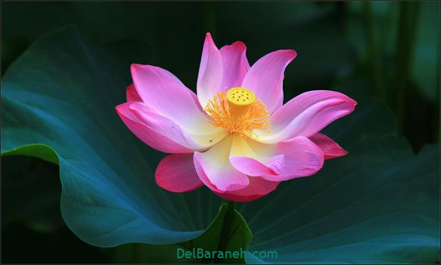 Flower profile photo (80)