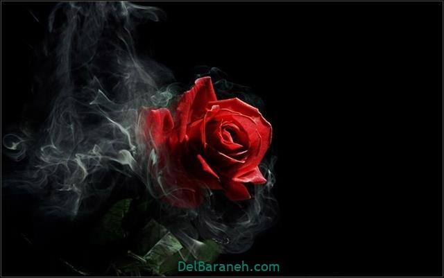 Flower profile photo (82)