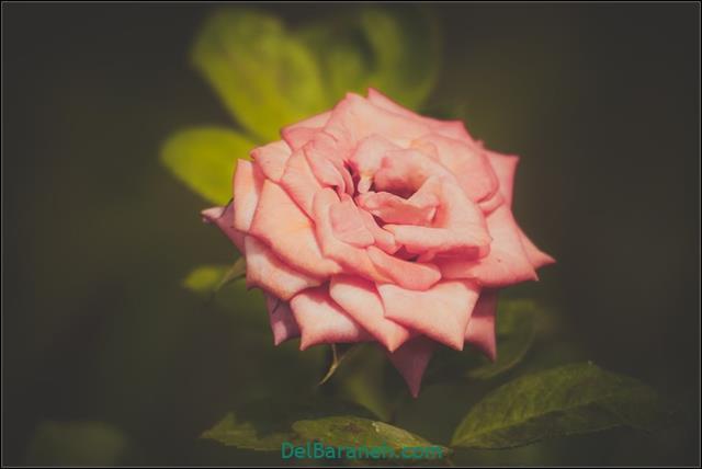 Flower profile photo (86)