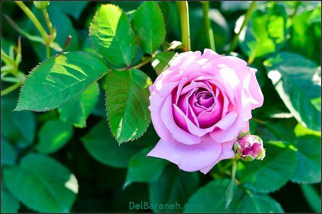 Flower profile photo (9)