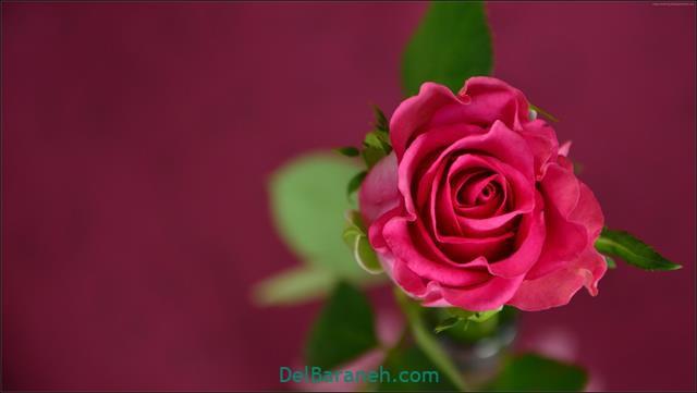 Flower profile photo (90)