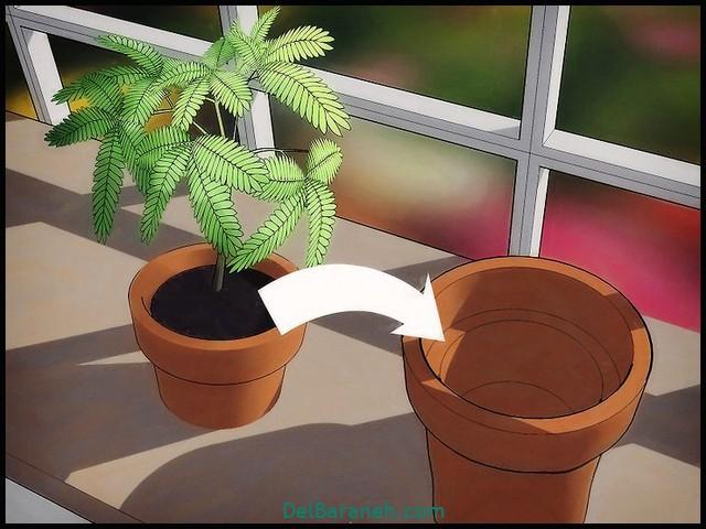 گیاه قهر و اشتی (۲)