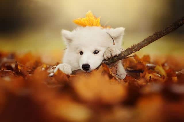 عکس سگ (۱)