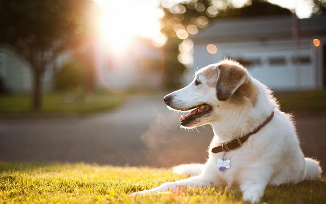 عکس سگ (۱۰)