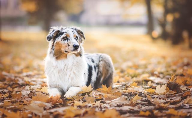 عکس سگ (۱۲)