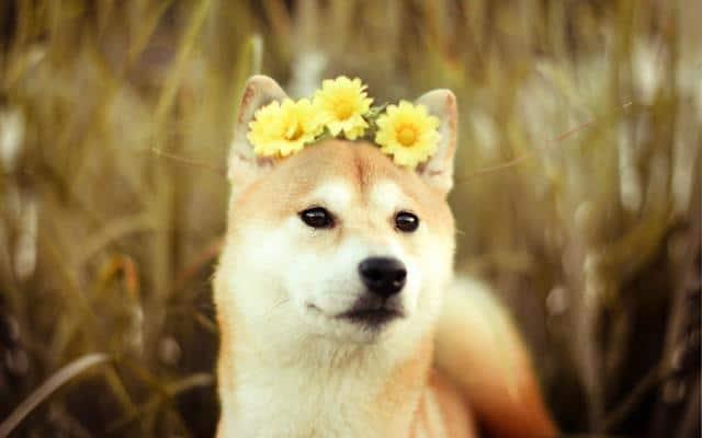 عکس سگ (۱۳)
