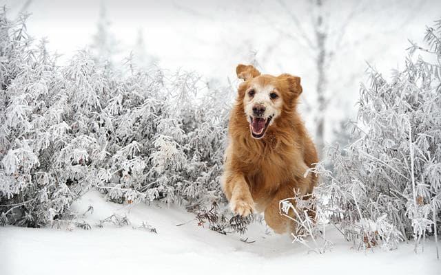 عکس سگ (۱۴)
